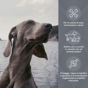 ARTIJOINT Supporto per le articolazioni di cani e gatti