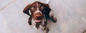 allergia-animali-domestici-gatti-cani-allergie-comuni-cause