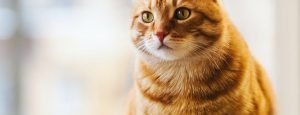 insufficienza-renale-nel-gatto-dieta-come-prevenire-cause-sintomi